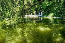 Grünes Wasser im Carolasee