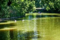 Grünes Wasser im Schatten der Bäume