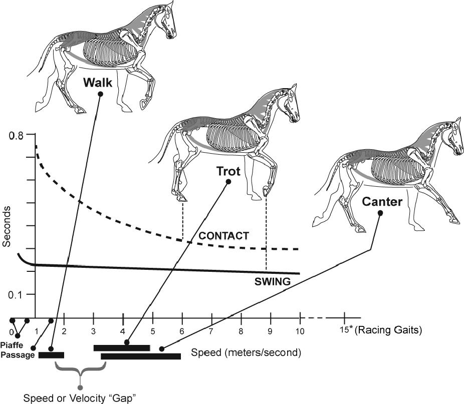 Horse As Athlete