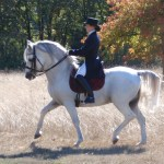 THE CONNECTION OF DRESSAGE