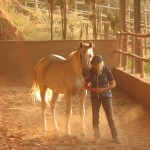 TRAINING OUR HORSES IN SYNCHRONY WITH NATURE