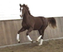 3yr Westfalen Training
