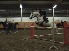 9yr Holsteiner S