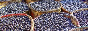 Acai Berry: The Superfood?