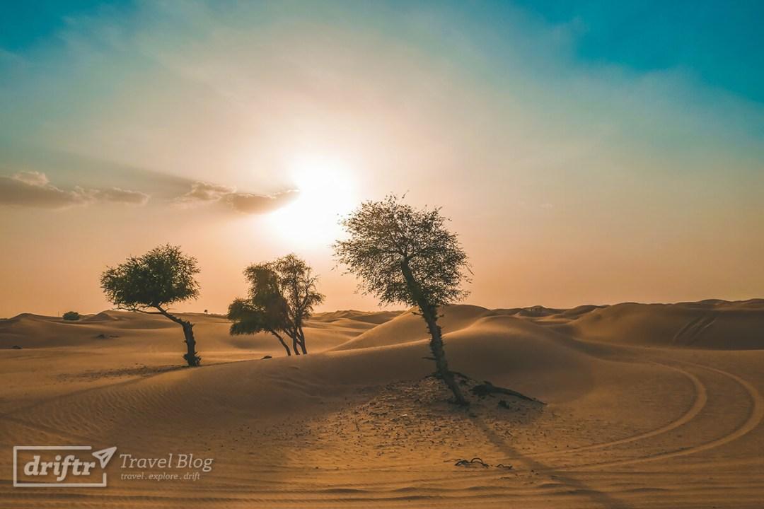 Vereinzelte Bäume in der Wüste