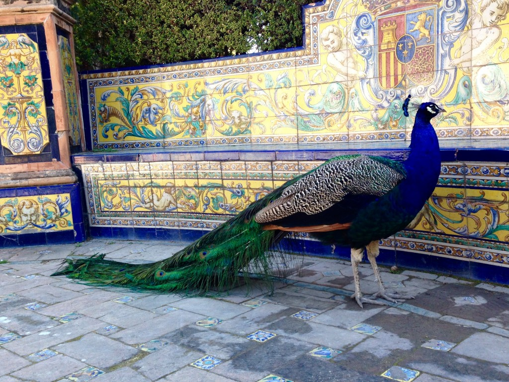 Peacock at the Alcazar in Seville, Andalusia, Southern Spain