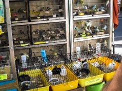 Bird and bunnies for sale on Las Ramblas, Barcelona