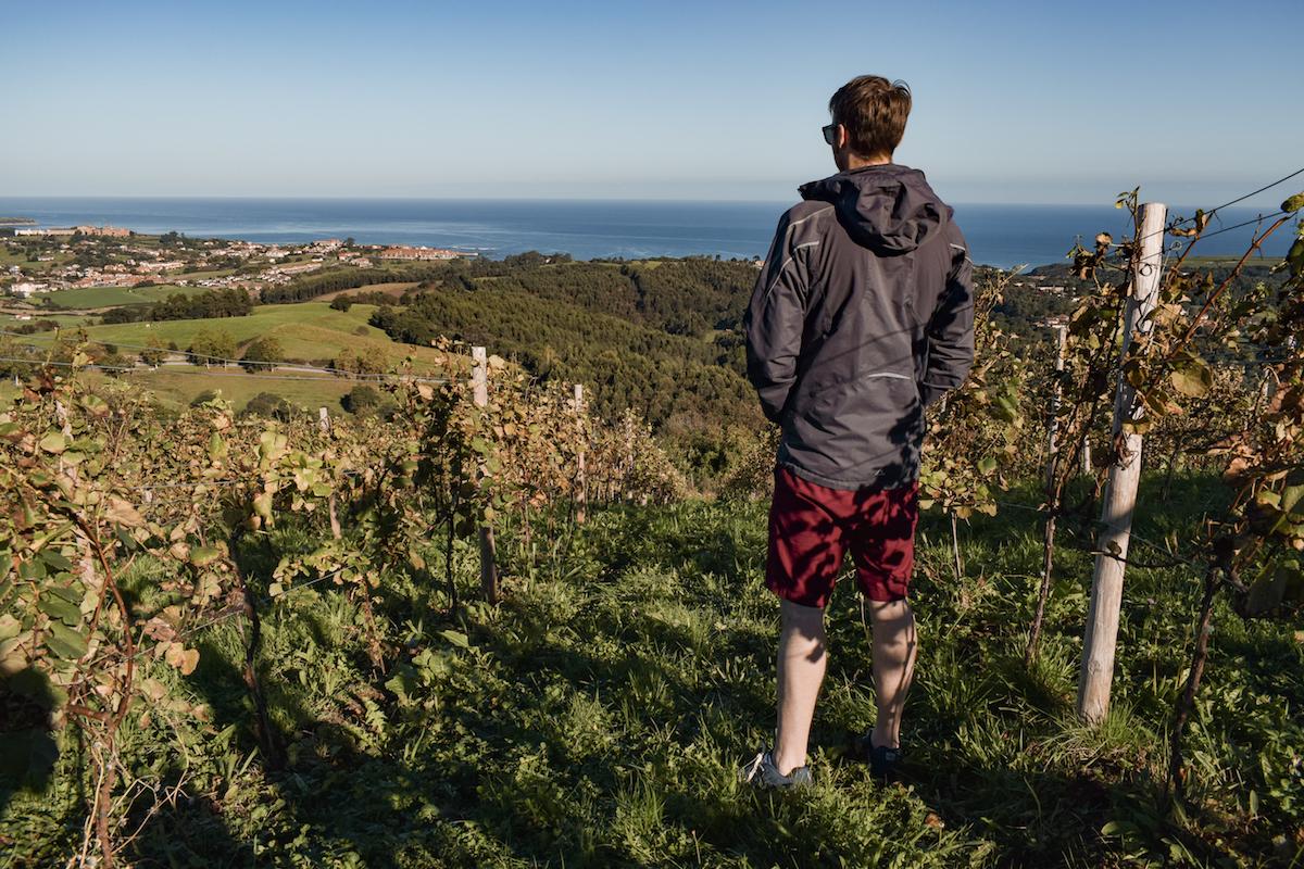 The vine-clad hills of Bodega Miradorio de Ruiloba in Cantabria.