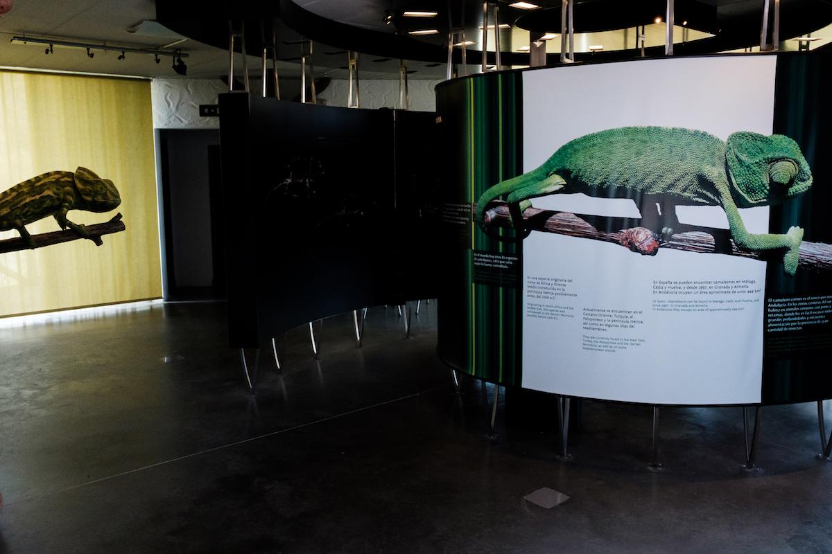 Chipiona Chameleon Centre.