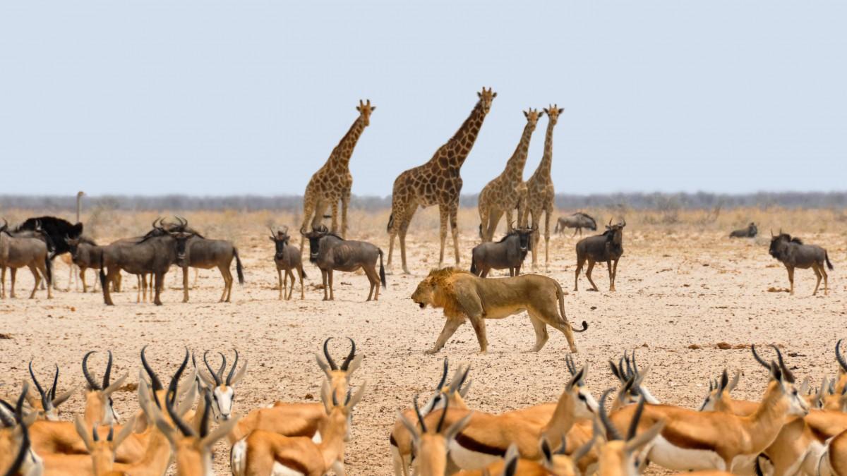 Namibia wildlife