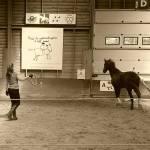 Het paard jou laten volgen