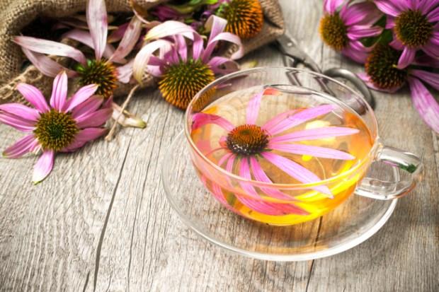 Tea Blends Echinacea Flower in Glass Teacup Herbal Teas Herbs Holistic Medicines