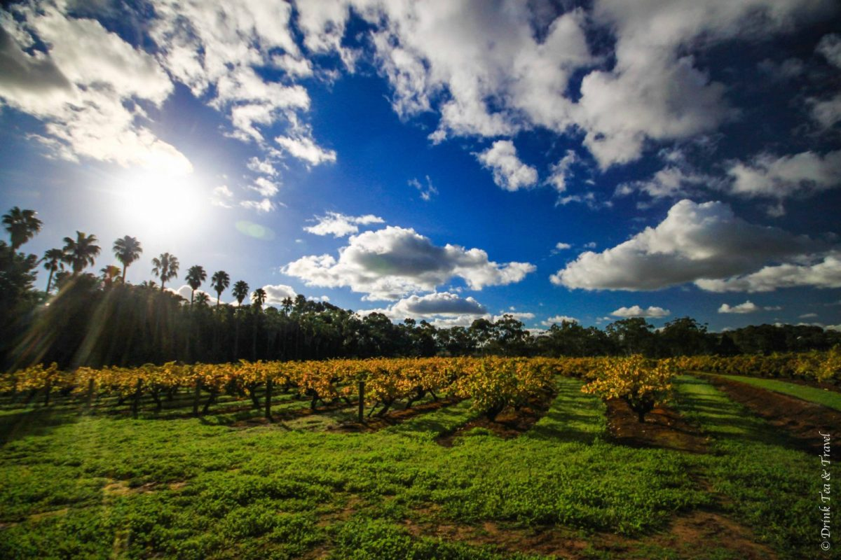 Top Things to do in Australia: 9. Go wine tasting in South Australia's Wine Regions
