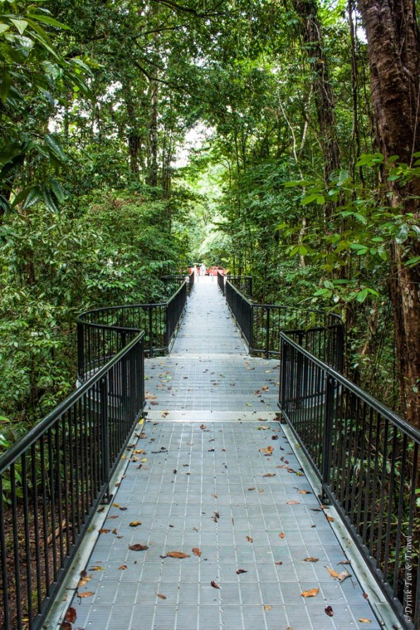 Boardwalk inside the Daintree National Park, Northern Queensland, Australia