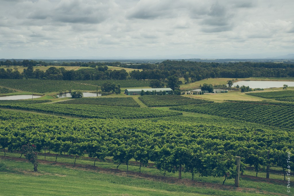 Rolling vineyards in Hunter Valley