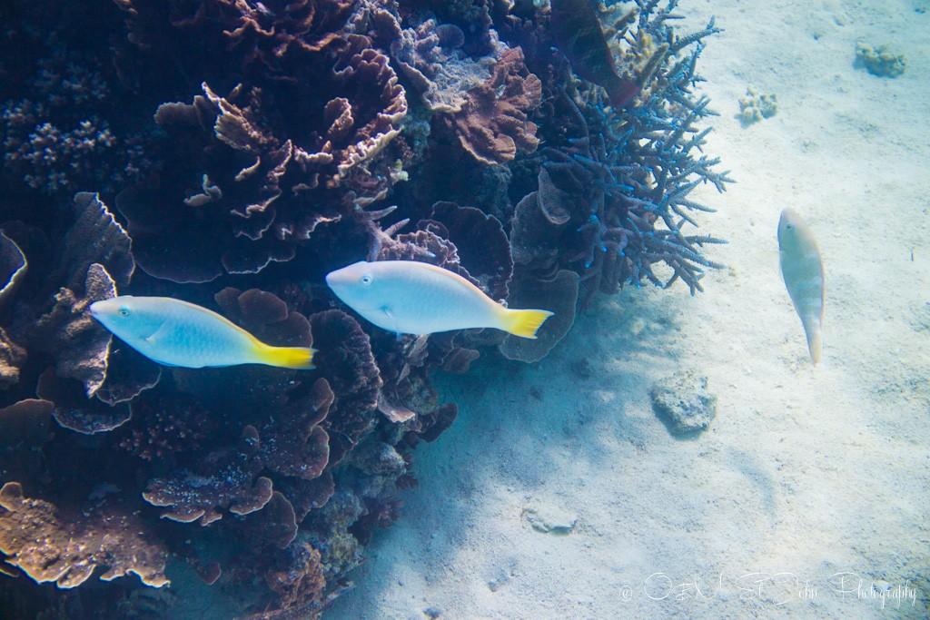 Snorkeling in Coral Bay. Western Australia