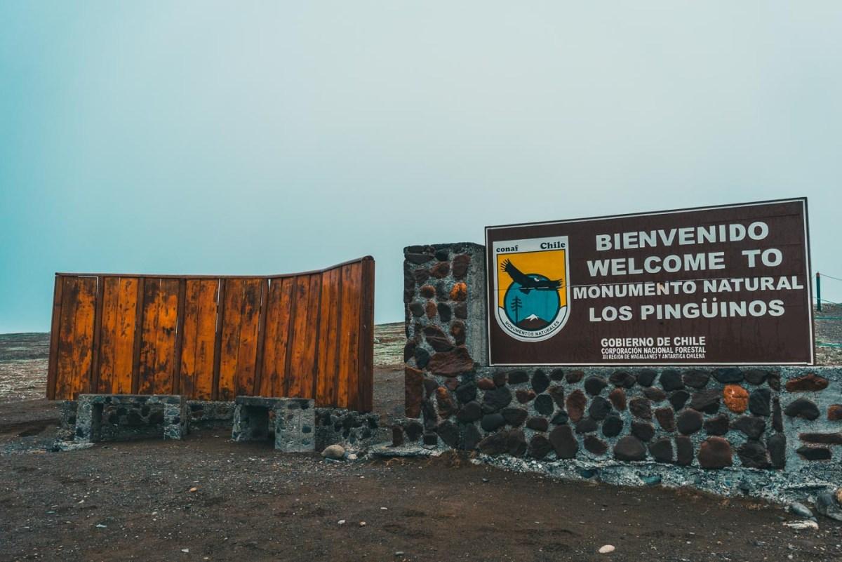 Chile Punta Arenas Isla Magdalena-9870
