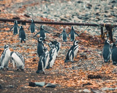 What was left of the Penguin colony on Isla Magdalena