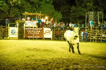 Costa Rica Fiesta. Bull fighting.
