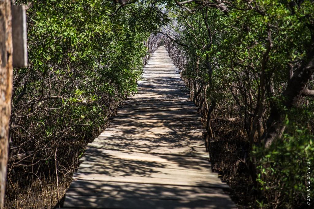 Boardwalk through the mangroves in Playa Avellanas, Costa Rica