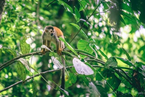 Costa Rica Manuel Antonio-8899