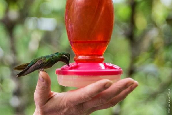 Reasons to visit Monteverde Cloud Forest: Bird watching