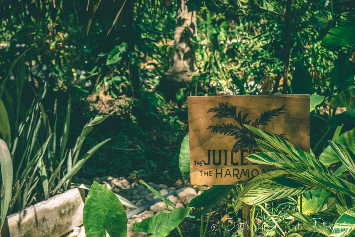 Harmony Hotel Juice Bar. Playa Guiones. Nosara. Costa Rica