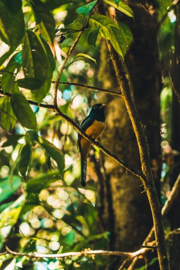Costa Rica Osa Corcovado-7895