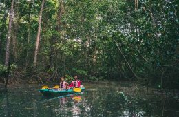 Kayaking in the mangroves of Osa Peninsula
