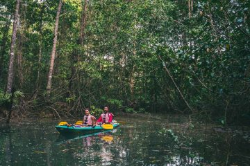 Kayaking in the mangroves of Osa Peninsula