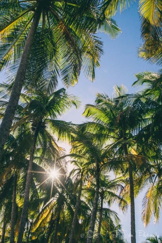 Costa Rica Samara-4802