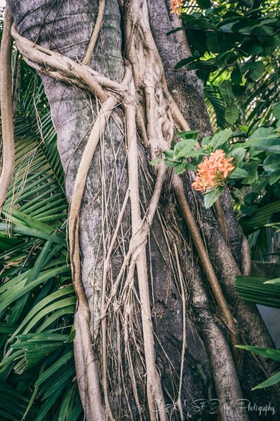 Costa Rica Samara-4828