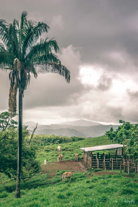 Costa Rica Santa Teresa-7946
