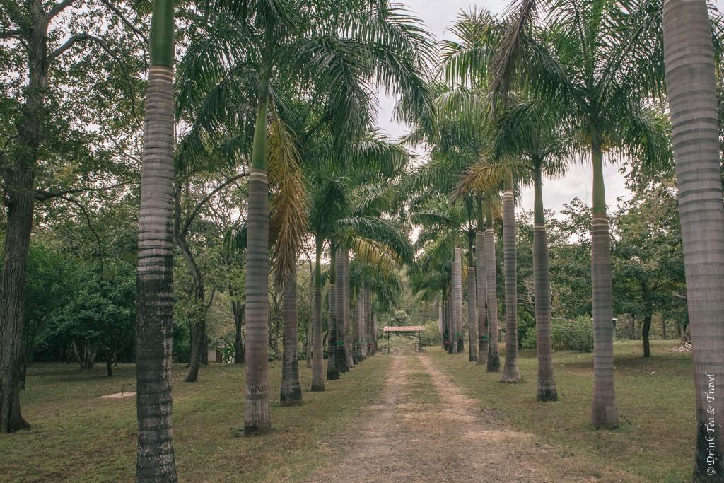 The Costa Rican jungle... aka the backyard