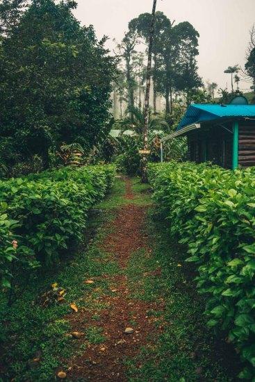 Costa Rica Tenorio-4311