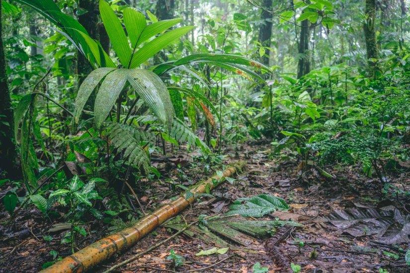 Tenorio National Park