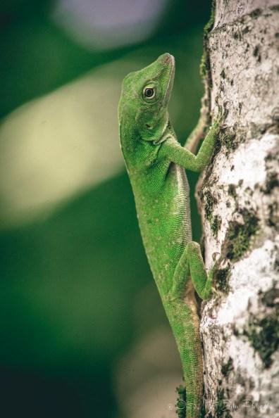 Costa Rica Uvita-8592