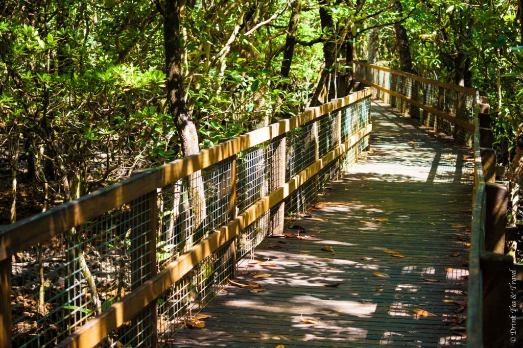 Boardwalk along the Marrja Botanical Walk