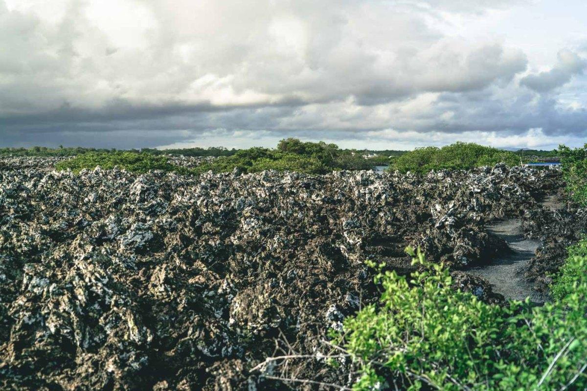 Ah-ah lava fields on Tintoreras islet near Isabela Island, Galapagos