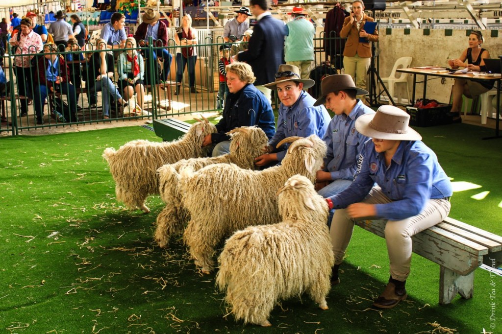Longhaired Goat Judging Competition
