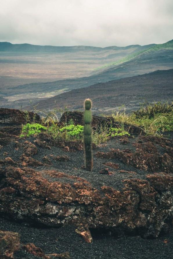 Galapagos Isabela Cerro Negro-3097