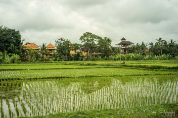Bali Itinerary for the Responsible Traveler