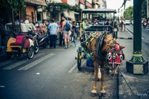 Horse carriage on Jalan Malioboro. Yogyakarta. Java. Indonesia