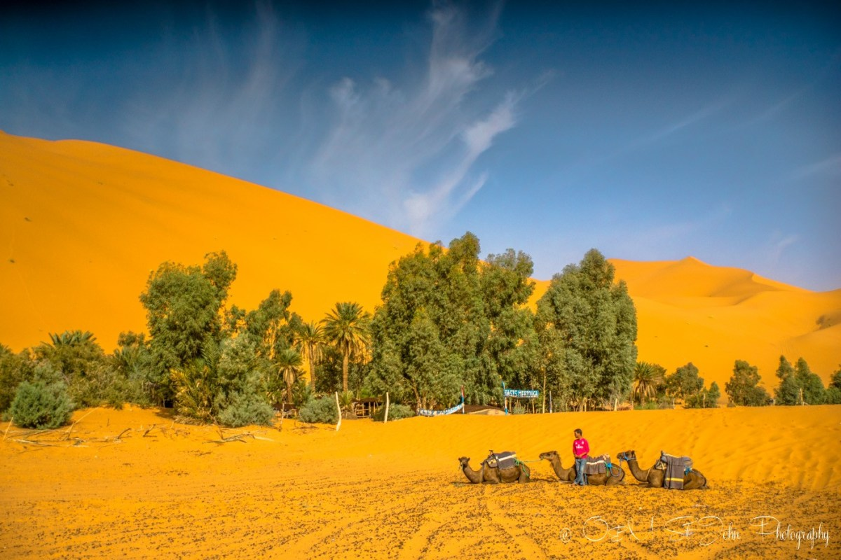 Oasis in the Sahara Desert, Erg Chebbi. Morocco