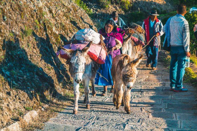 Peru Lake Titicaca Amantani local donkeys-5233