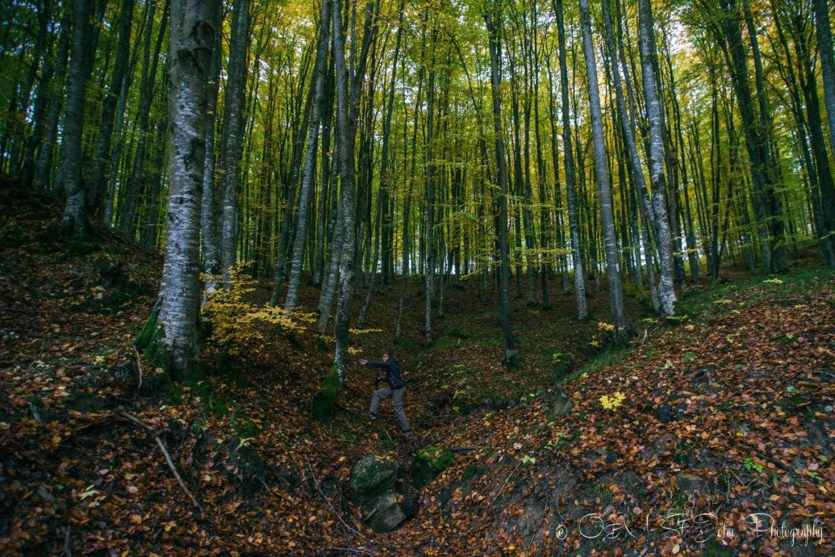 Exploring Maramures Forest. romania