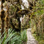 Inca Trail (day 3) - Cloud Forest