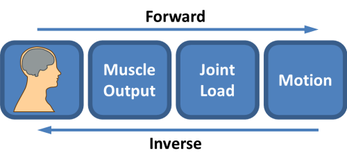 Forward Dynamics