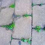 weeds-growing-between-pavers