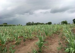 'I haven't eaten in three days': Understanding personal experience of food insecurity in rural Malawi'
